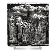 Brook Lake In The West Hylebos Wetlands Shower Curtain