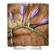Brown And Purple Shower Curtain