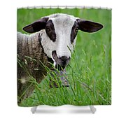 Brown And White Sheep Shower Curtain
