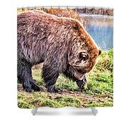 Brown Bear 201 Shower Curtain