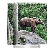 Brown Bear 208 Shower Curtain