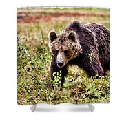 Brown Bear 210 Shower Curtain
