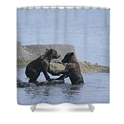 Brown Bear Cubs Playing On A Rocky Shower Curtain
