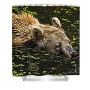 Brown Bear Swimming Shower Curtain