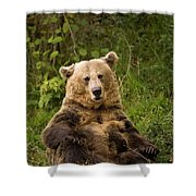 Brown Bear Ursus Arctos, Asturias, Spain Shower Curtain