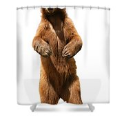 Brown Bear Ursus Arctos Shower Curtain