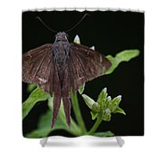 Brown Butterfly Dorantes Longtail Shower Curtain