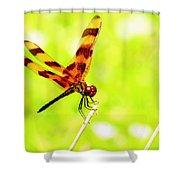 Brown Dragon Shower Curtain