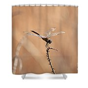 Brown Dragonfly And Brown Reeds Shower Curtain