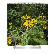 Brown-eyed Susan In The Woods Shower Curtain by Gary Eason