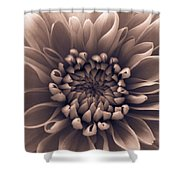 Brown Flower Shower Curtain