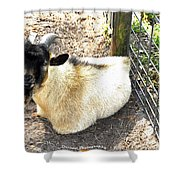 Brown Goat  Shower Curtain