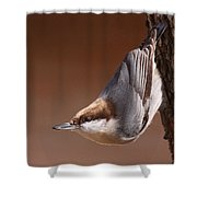 Brown-headed Nuthatch - Little Nutty Shower Curtain