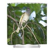 Brown Honeyeater Shower Curtain