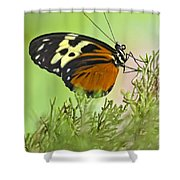 Brown Is Beautiful Shower Curtain