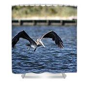 Brown Pelican - Low Flyer Shower Curtain
