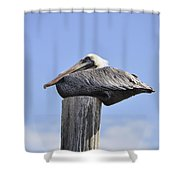Brown Pelican 2 Shower Curtain