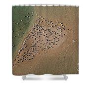 Brown Pelican Flock Shower Curtain