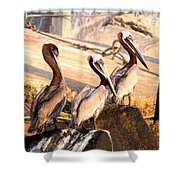 Brown Pelican - Holding Things Together Shower Curtain