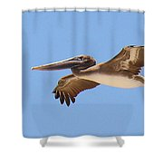 Brown Pelican In High Flight Shower Curtain