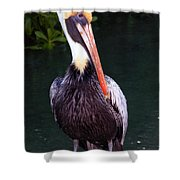 Brown Pelican Islamorada Shower Curtain