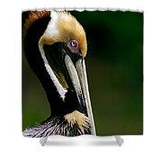 Brown Pelican Profile Shower Curtain