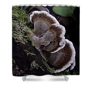 Brown Polypore Shower Curtain