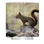 Brown Squirrel In Spokane Shower Curtain