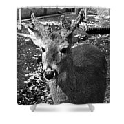 Brushy Mountain 3 Shower Curtain