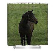 Bryzgalov Shower Curtain