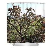 Buchorn Cholla Shower Curtain