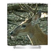 Buck 9246 4037 2 Shower Curtain