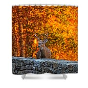 Buck Digital Painting - 01 Shower Curtain