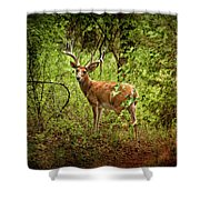 Buck In Full Velvet Shower Curtain
