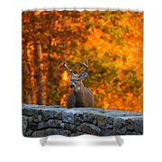 Buck In The Fall 01 Shower Curtain