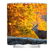 Buck In The Fall 06 Shower Curtain