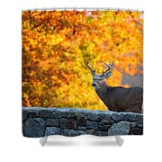 Buck In The Fall 07 Shower Curtain