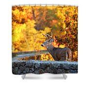 Buck In The Fall 09 Shower Curtain