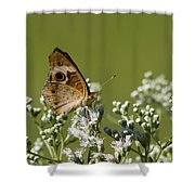 Buckeye Butterfly And Lesser Snakeroot Wildflowers Shower Curtain