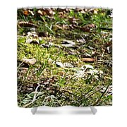 Buckeye Lakeview Shower Curtain