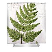 Buckler Fern Shower Curtain