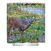 Buckly Shower Curtain