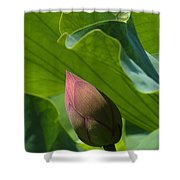 Bud Watched Over Dl050 Shower Curtain