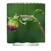 Bud With Drops Shower Curtain