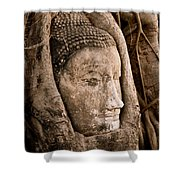 Buddha Head Strangled By The Roots  Shower Curtain
