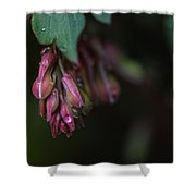 Budding Hearts Shower Curtain