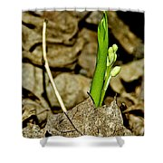 Budding Lilly Shower Curtain