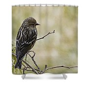 Budding Spring Song Shower Curtain