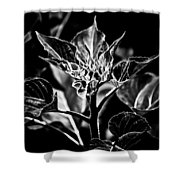 Budding Sunflower Shower Curtain