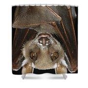 Buettikofers Epauletted Bat Epomops Shower Curtain